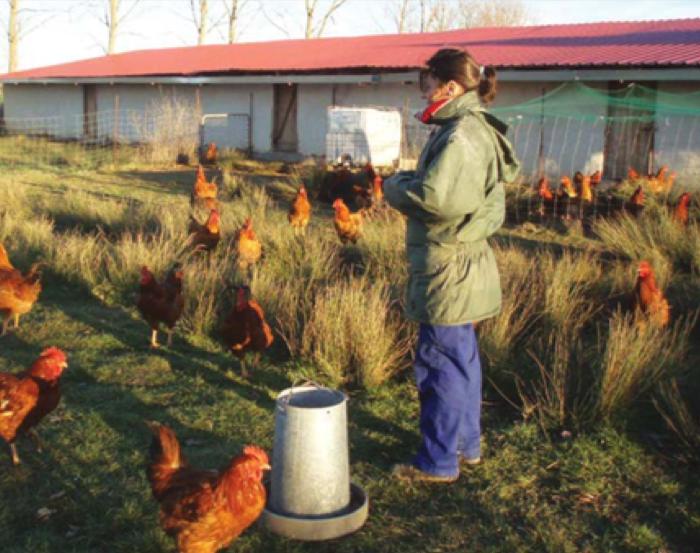 """""""Uno de los mayores retos con los que me encontré fue aprender a producir, ya que no había manual de cómo criar aves en ecológico"""""""