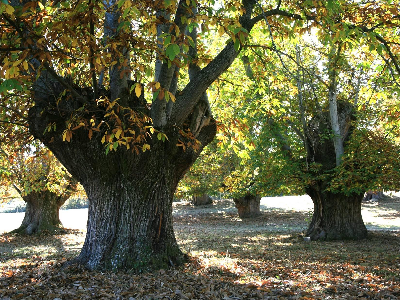 Sistemas agroforestales, silvopastoralismo y agroecología en Galicia