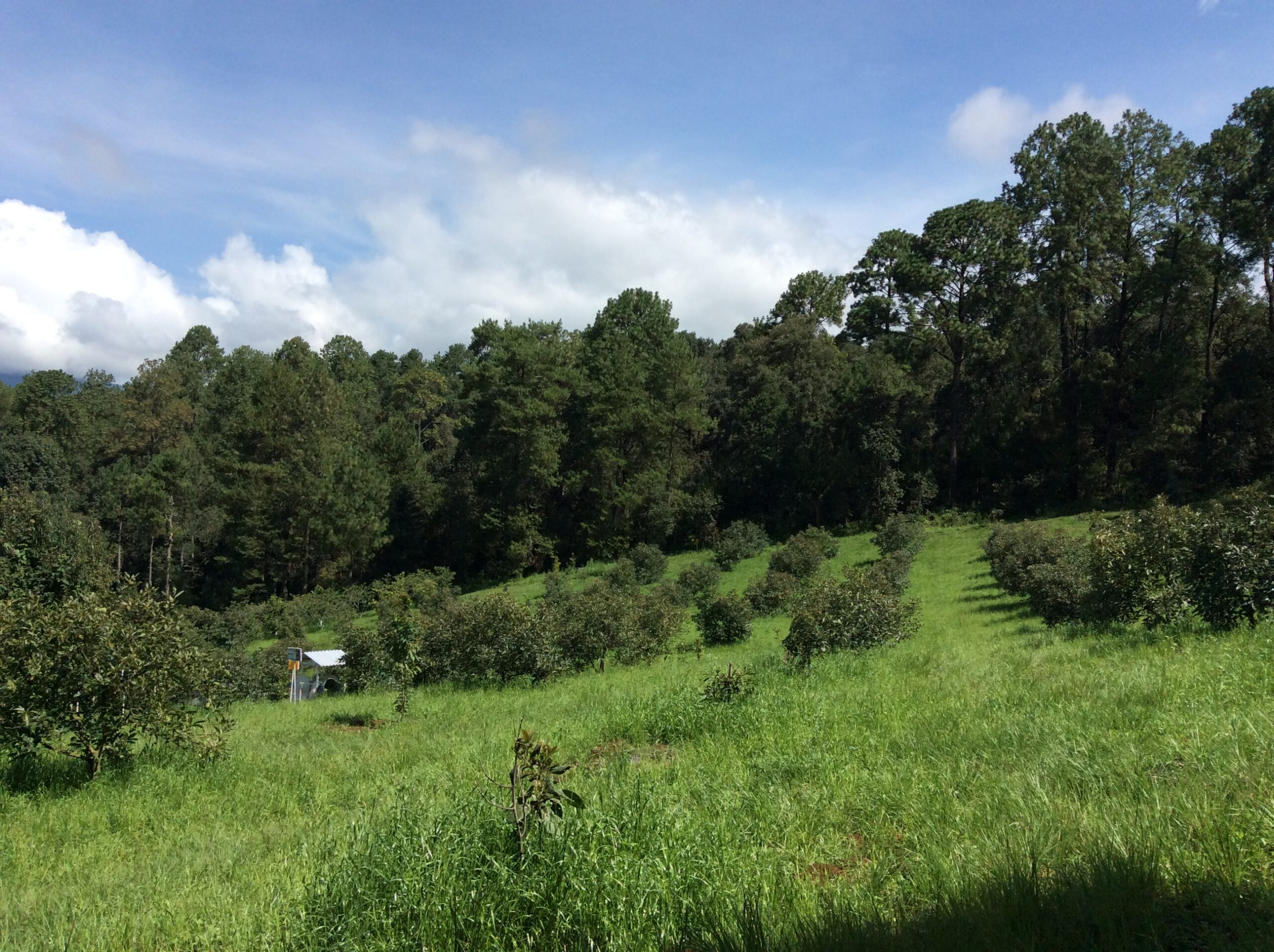 Contribuciones cruzadas de la agricultura ecológica a la transición agroecológica
