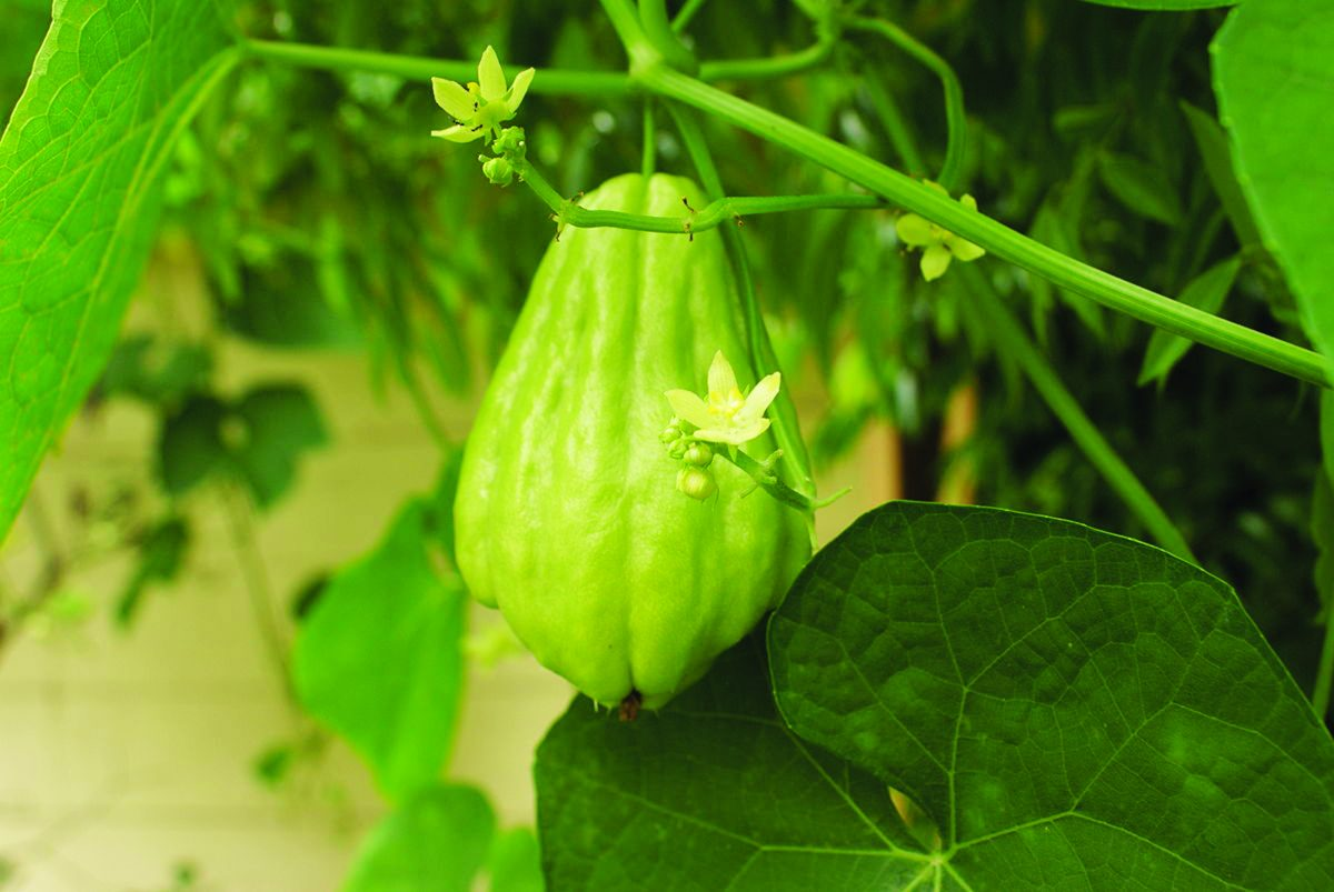 Protección agroecológica de cultivos en AE – Un nuevo enfoque