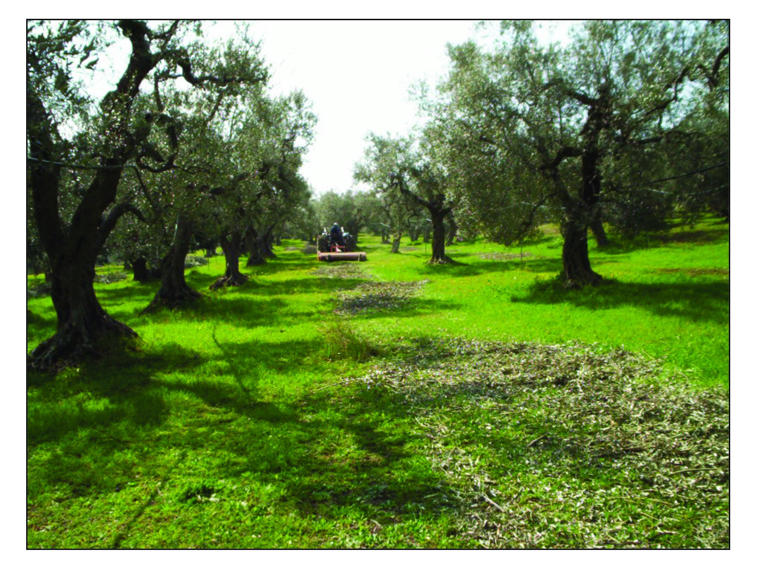 Buenas prácticas agrícolasen el manejo del Síndrome de Declinación Rápida del Olivo