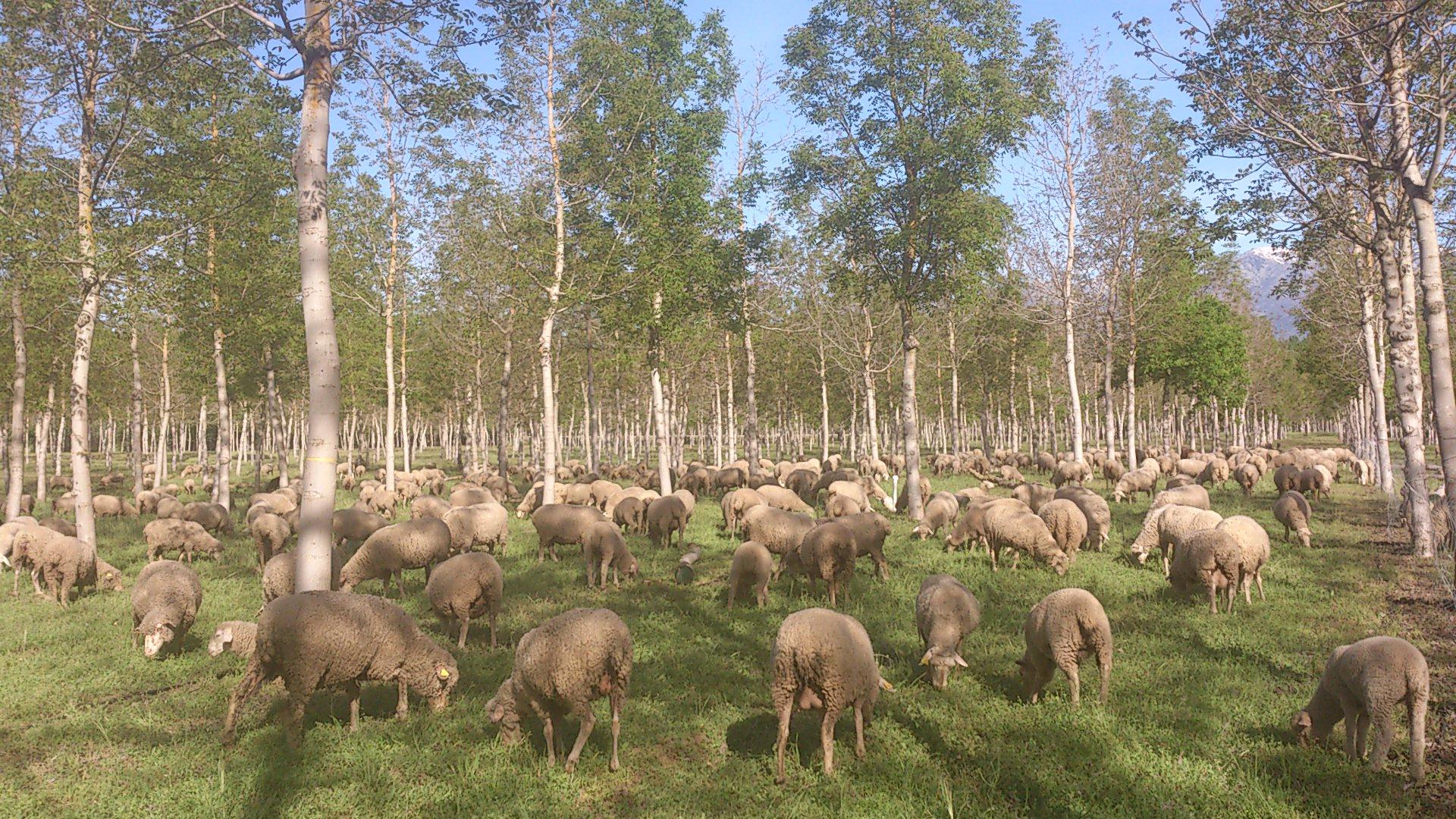 Agroforestería: incluyendo plantas y animales en la producción agroecológica
