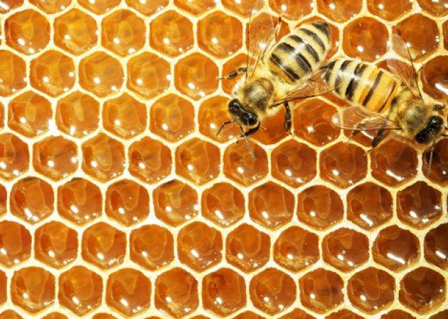 Miel ecológica: mitos y verdades