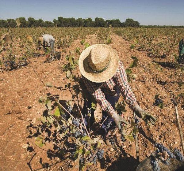 Cultivos sedientos. Al rescate de la agricultura de secano, por nuestros ríos