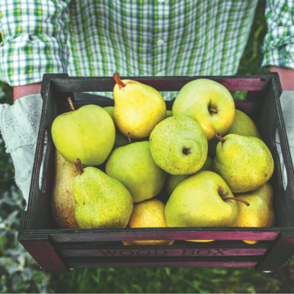 Agricultura ecológica: producirla y celebrarla