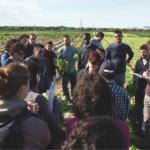 La formación universitaria en agroecología y agricultura ecológica: absolutamente necesaria para favorecer la transición ecológica