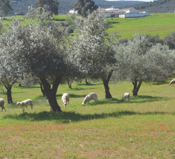 Carne ecológica y seguridad alimentaria