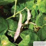 Calidad nutricional de las leguminosas y su papel en la alimentación