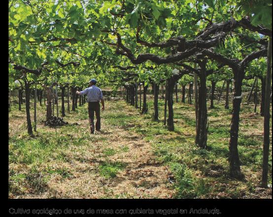 Agricultura ecológica y cambio climático